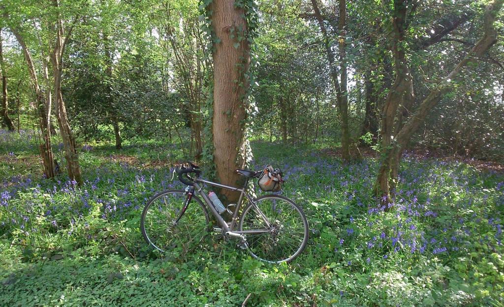 Beautiful bluebell woods near Limpsfield
