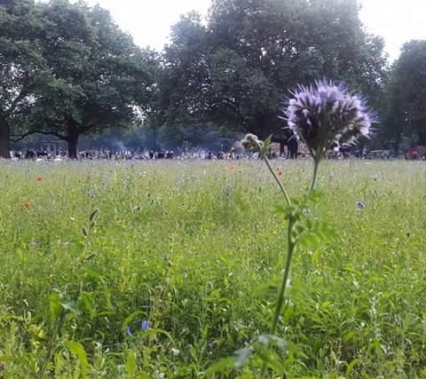 Wild flower meadow in the urban jungle